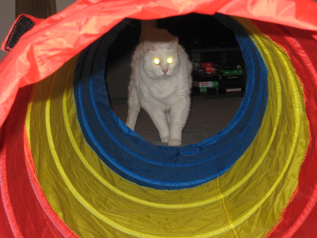 Mugga in tube